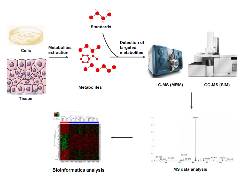 MtoZ Biolabs offers targeted metabolomics analysis service using an LC-MS-based MRM and GC-MS-based SIM technologies, with high accuracy, specificity, and sensitivity.